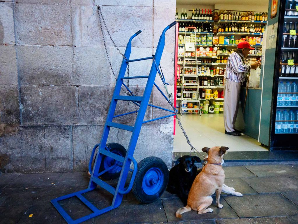 A couple of dogs wait for their owner to buy in the market La Boqueria, Barcelona
