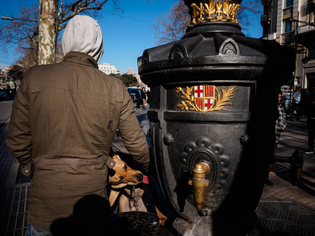 A man opens the water at Canaletes Fountain for his dog to drink, Las Ramblas, Barcelona